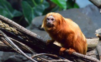 Notre mental, ce petit singe…